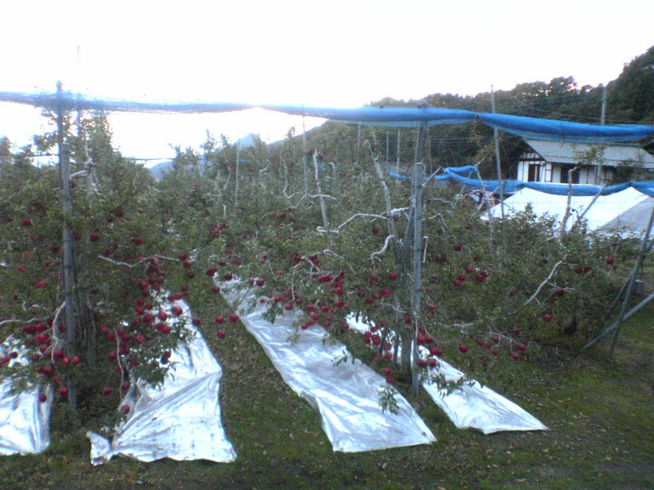 リンゴ直売所